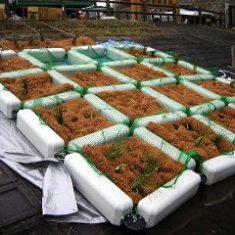 水生植物の栽培を助けるピアバイオニー